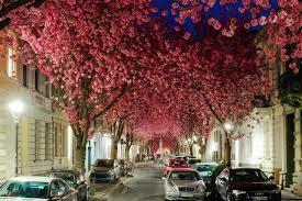 drzewa-na-ulicy