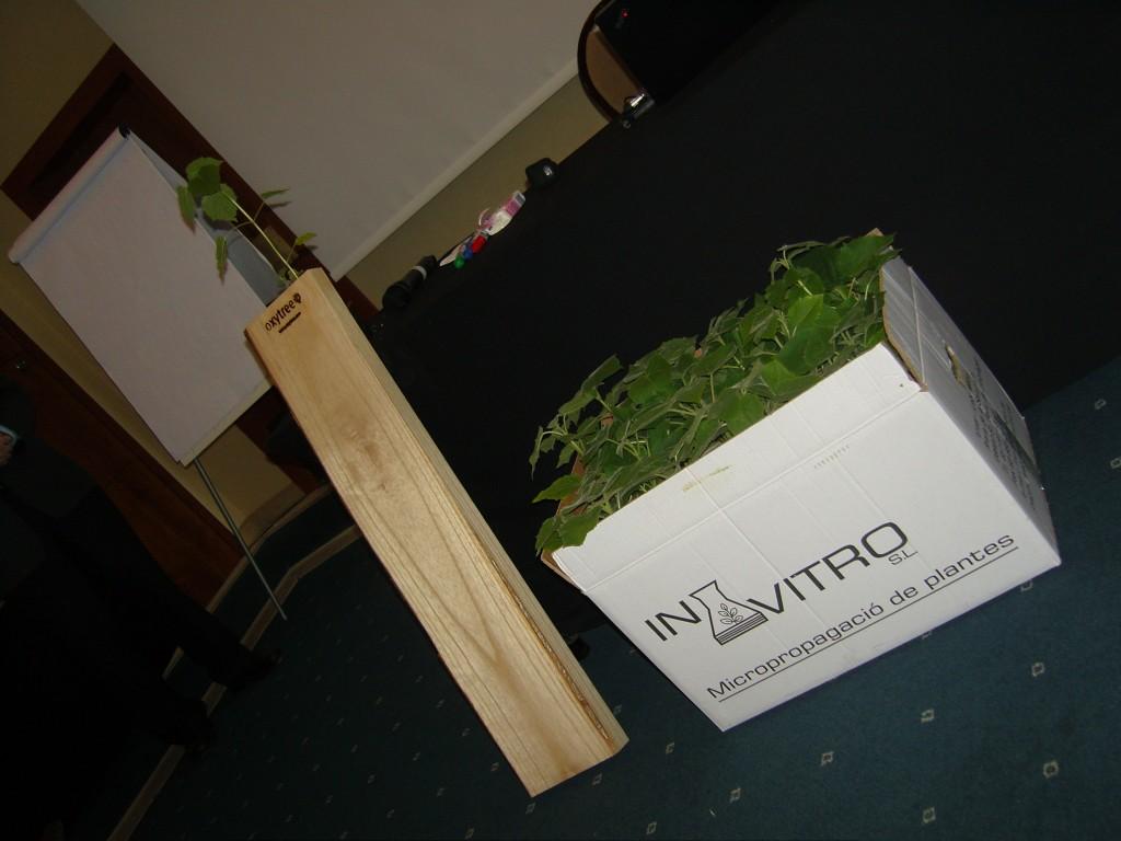 Oxytree sadzonki i drewo